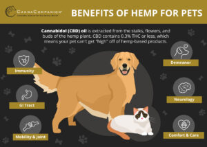 CBD for Pets Infographic